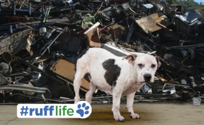 Ruff Life: Bonnie