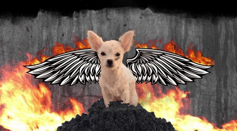 Ruff Life: Phoenix