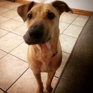 Goldie was hurt and needs jaw surgery to be able to eat normally and be pain-free.