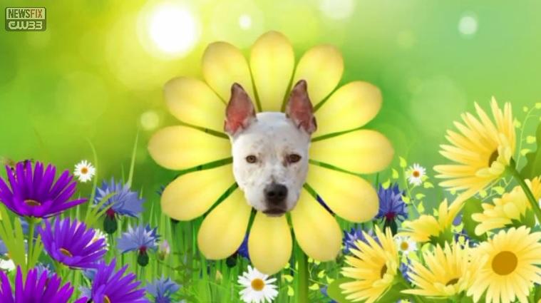 Ruff Life: Flower