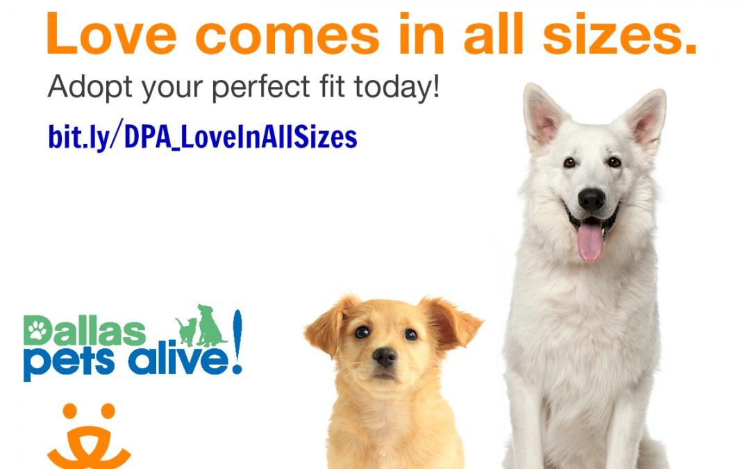 March special: Love Comes In ALL Sizes!