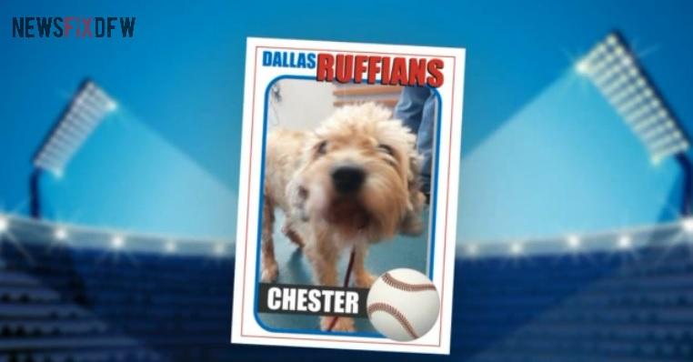 Ruff Life: Chester