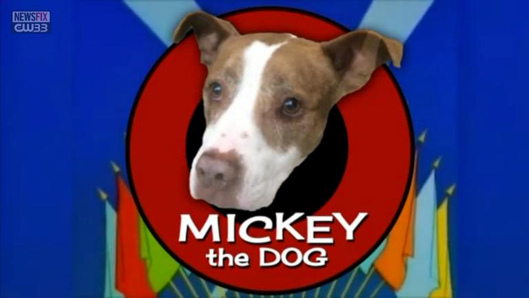 Ruff Life: Mickey
