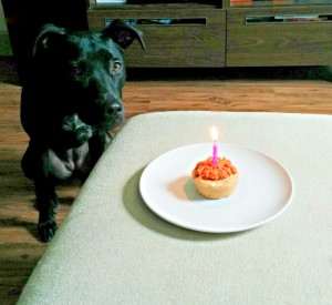 Buffy with her pupcake.