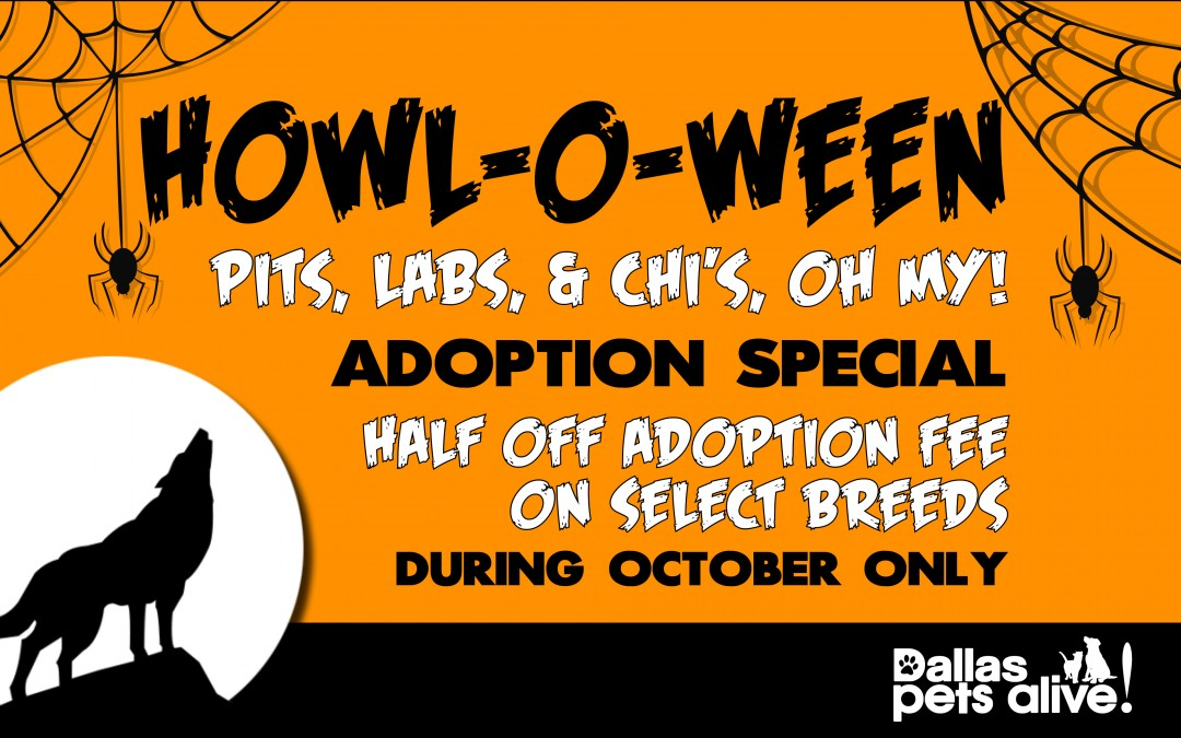HOWL-O-Ween Adoption Special + HALLOWEEN CONTEST