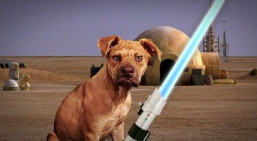 Ruff Life: The Force is Strong with Jakku