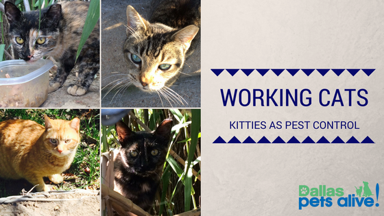 Working Cats: Kitties as Pest Control