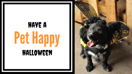 Have A Pet-Happy Halloween
