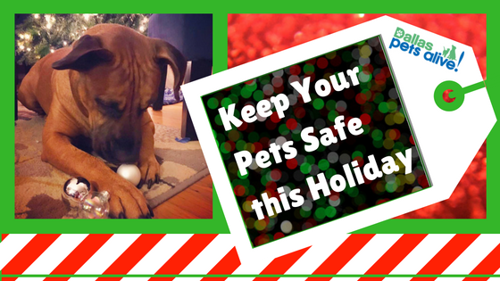 Keep Your Pets Calm and Safe this Holiday