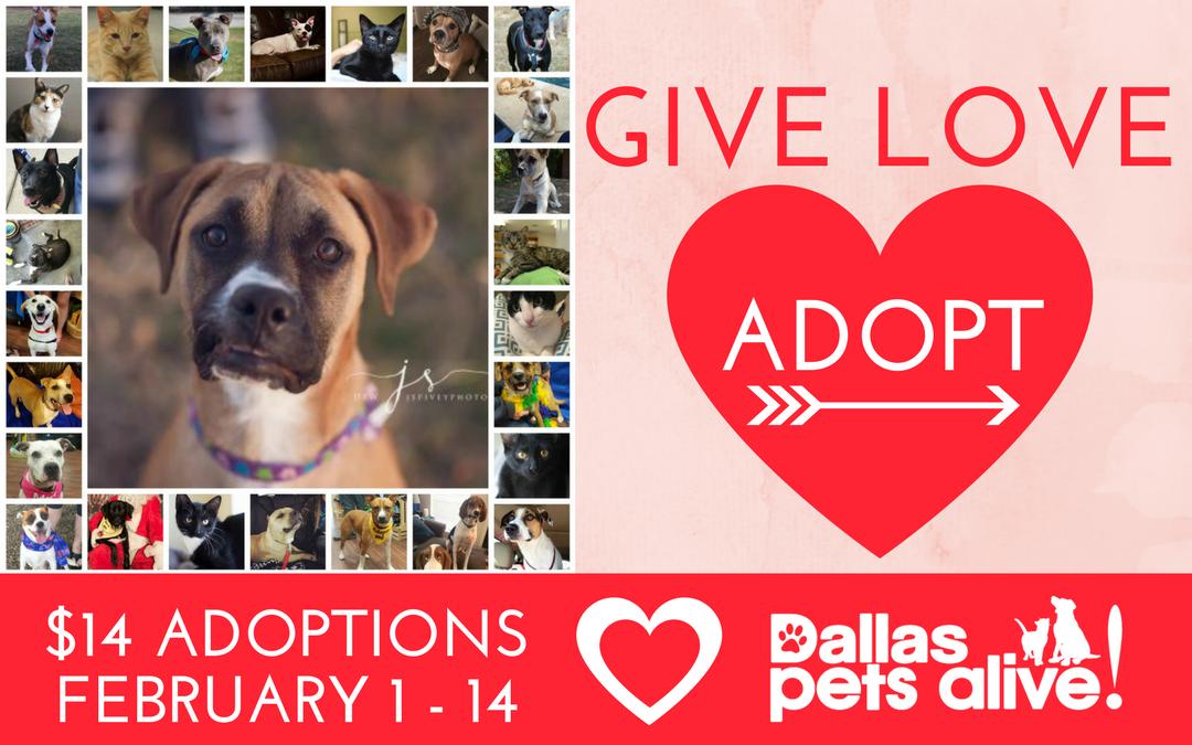 Give Love Adoption Promo