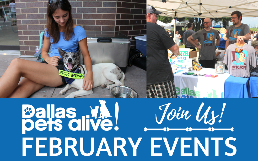 Dallas Pets Alive! Packs the Month of Love with Four-Legged Fun