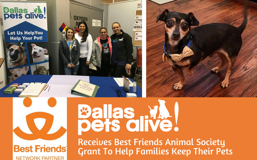 Dallas Pets Alive! Receives Best Friends Animal Society Grant To Help Families Keep Their Pets