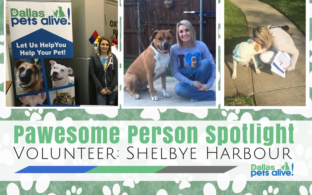 DPA's Pawesome Person: May Volunteer Spotlight