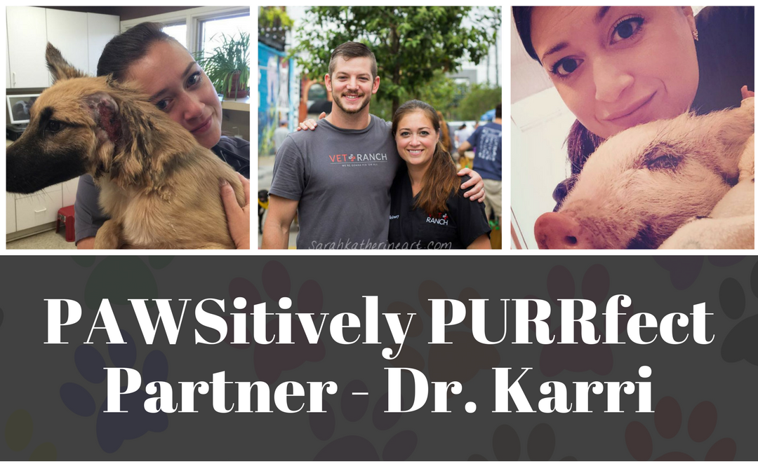 A PAWSitively PURRfect Partner – Dr. Karri