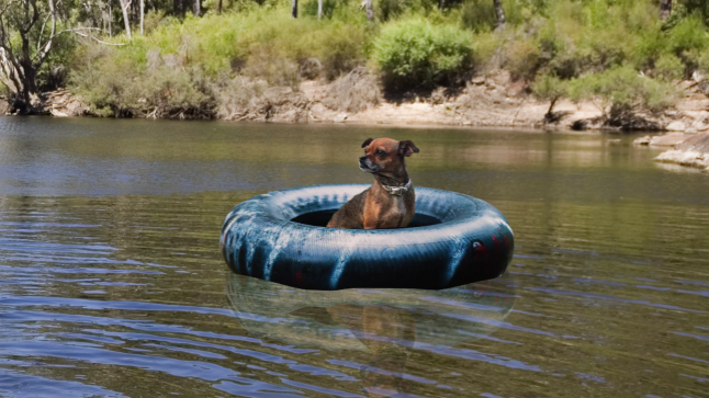 Ruff Life: Float on, Lady Guadalupe