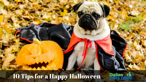 10 Tips for a Happy (and safe!) Halloween for Your Pets