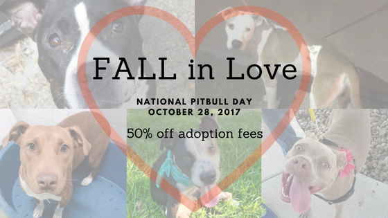 FALL in love: National Pitbull Day Adoption Special