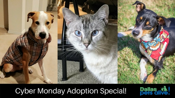 Cyber Monday Adoption Special!