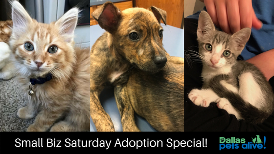 """Small Business"" Saturday Adoption Special!"