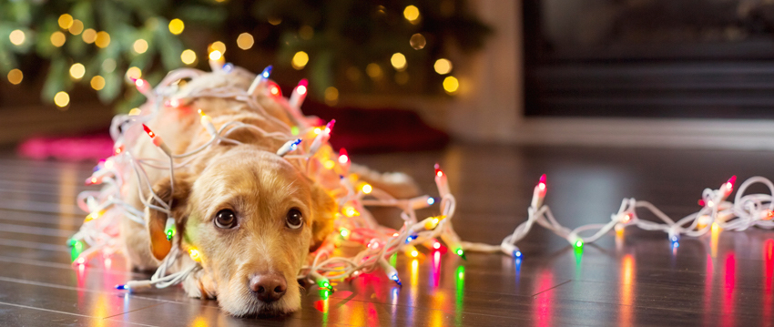 10 Tips for Holiday Pet Safety