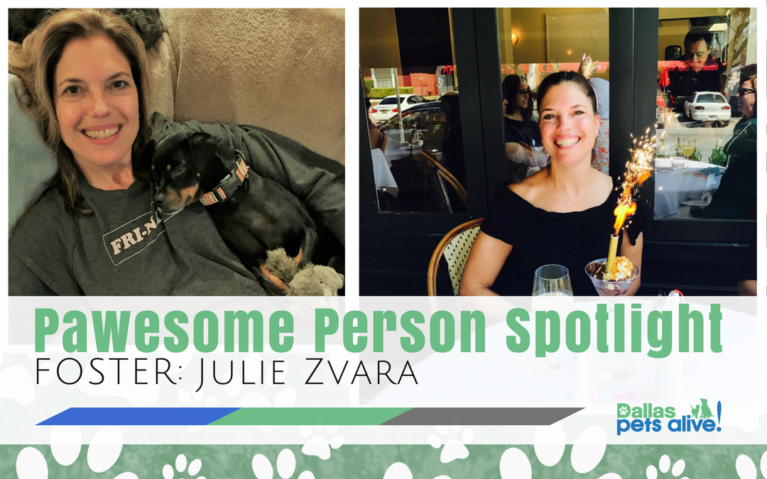 DPA's Pawesome Person: December Foster Spotlight