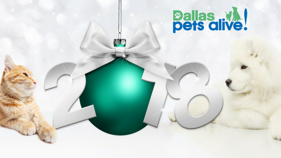 NYE Safety Tips for Your Pets