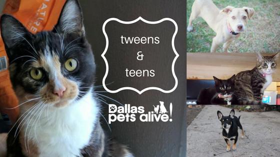 Dallas Pets Alive! Tweens & Teenagers