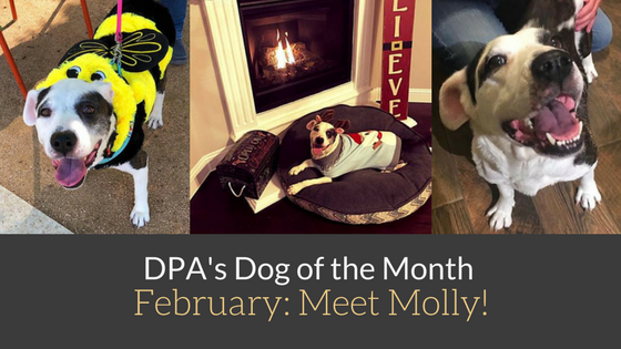 DPA's Dog of the Month – February: Meet Molly!