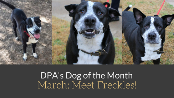 DPA's Dog of the Month – March: Meet Freckles!