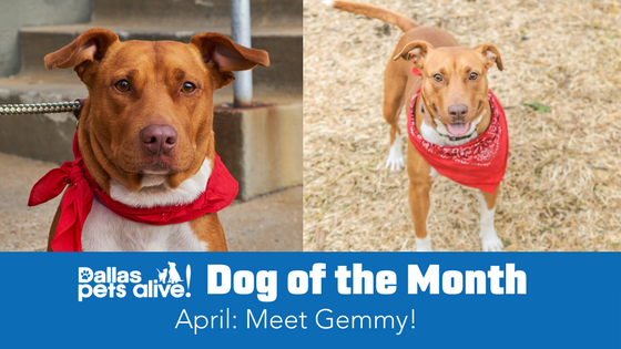 DPA's Dog of the Month – April: Meet Gemmy!