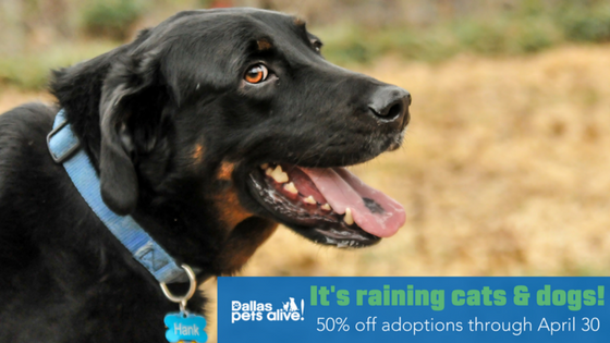 It's Raining Cats & Dogs! April Adoption Special