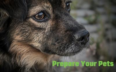 Just in case: Animal Disaster Preparedness