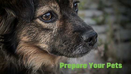 Just in case: Animal Disaster Preparedness