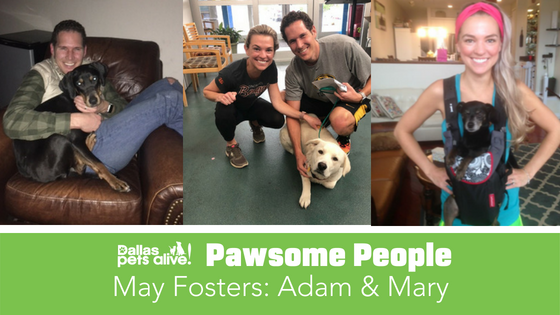 DPA's Pawsome People: May Foster Spotlight