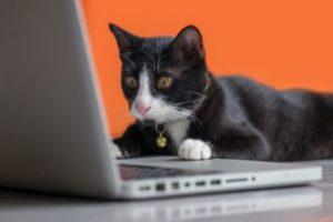Shop AmazonSmile to help Dallas Pets Alive