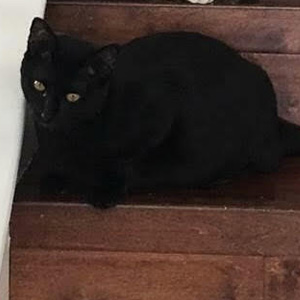 LIP ADOPTABLE CAT DALLAS PETS ALIVE
