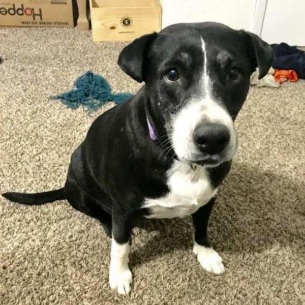 Gem Adoptable Dog Dallas Pets Alive