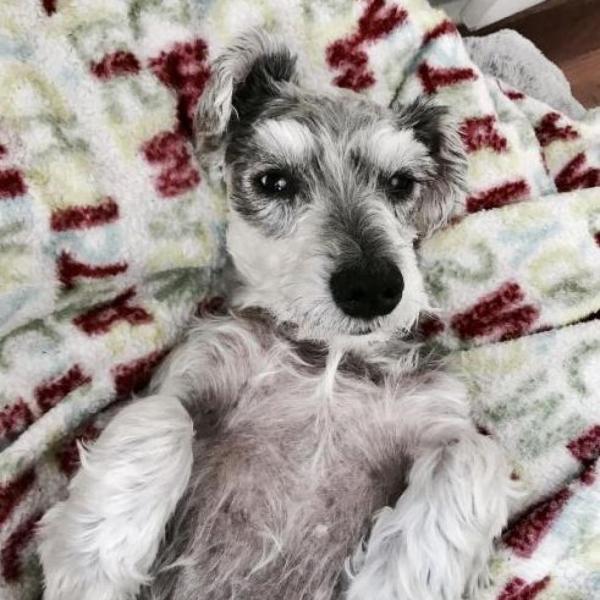 LOUISE ADOPTABLE DOG DALLAS PETS ALIVE