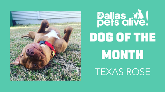 DPA's Dog of the Month — July: Meet Texas Rose