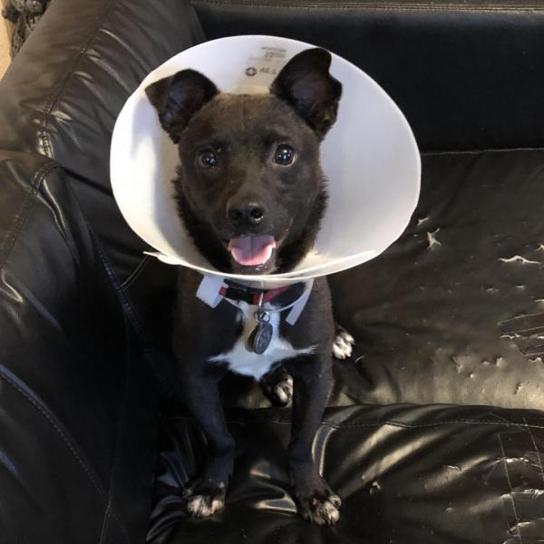 Camden Adoptable Dog Dallas Pets Alive