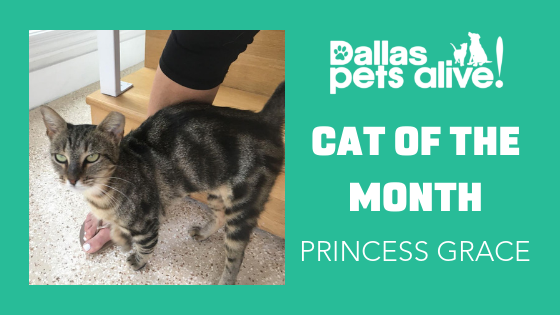 DPA Cat of the Month – November: Meet PRINCESS GRACE