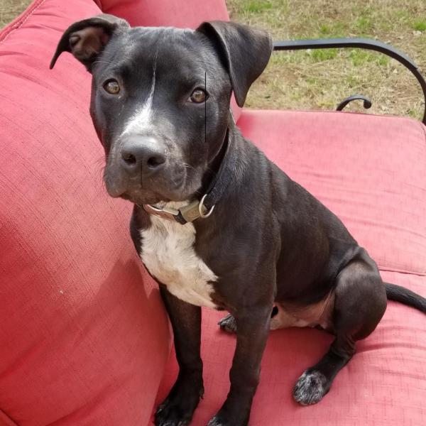 Crockett Adoptable Dog Dallas Pets Alive