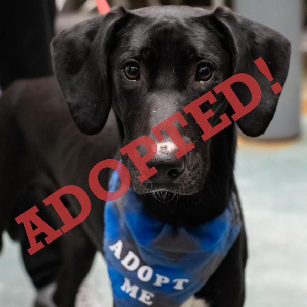 Dilly Dilly Adopted Dog Dallas Pets Alive