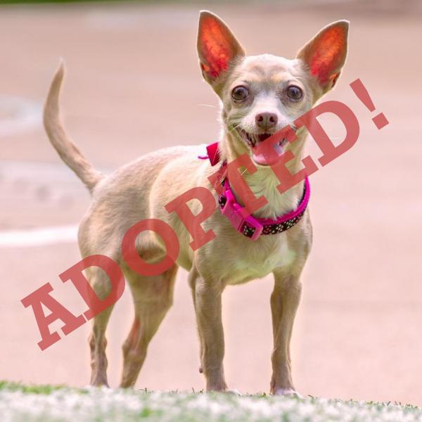 chloe adopted dog dallas pets alive