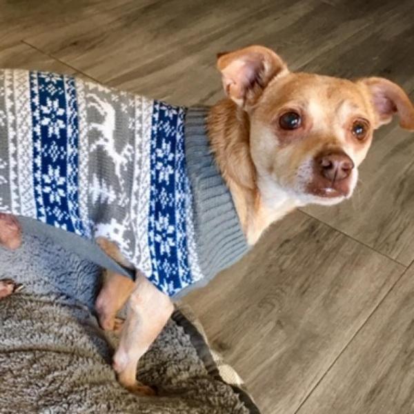 Digby Adoptable Dog Dallas Pets Alive