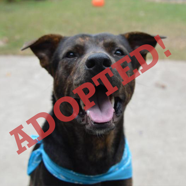Dude Adopted Dog Dallas Pets Alive