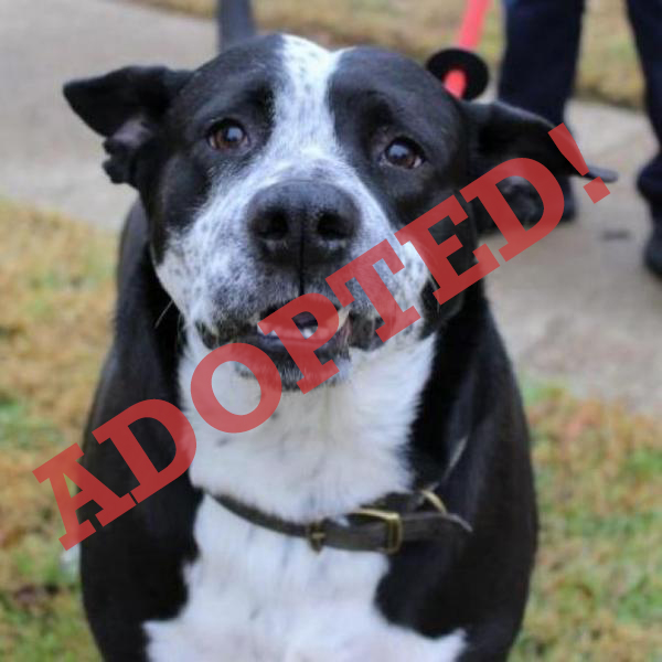 Freckles Adopted Dog Dallas Pets Alive