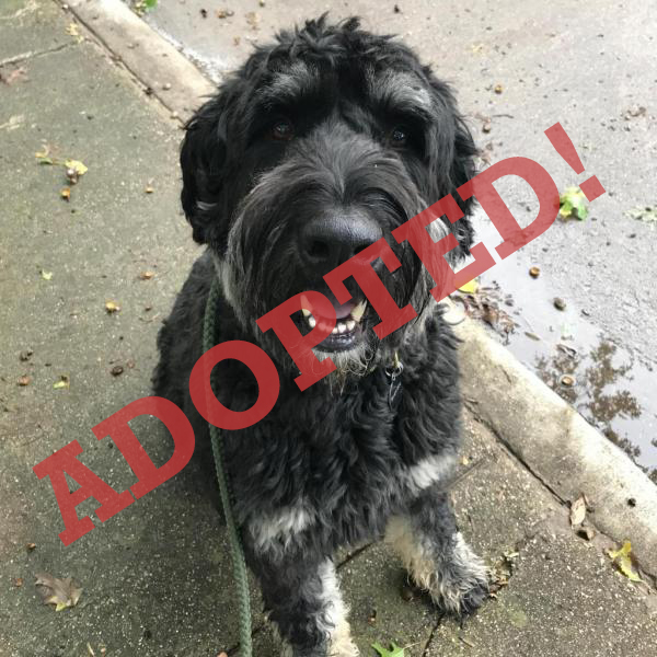 Leo Adopted Dog Dallas Pets Alive