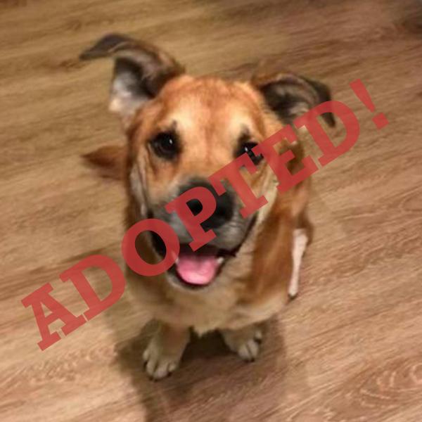 MAUI ADOPTed DOG DALLAS PETS ALIVE