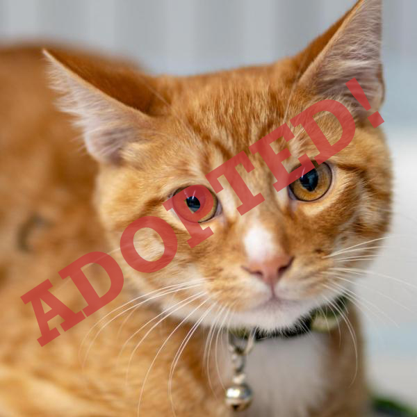 MEWKISS ADOPTED CAT DALLAS PETS ALIVE